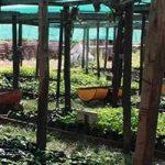 Plant production